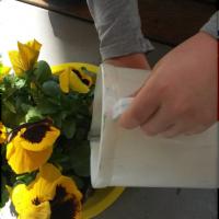 Prendersi cura di una pianta
